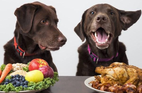 El alimento ideal para nuestro perro y atributos que debe tener