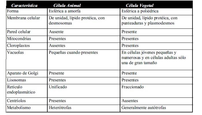 Cuadro comparativo entre una célula vegetal y una animal