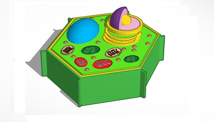 La célula vegetal y sus organelos.