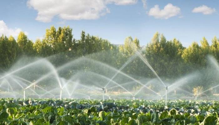 Manual de riego para agricultores: 3 principios básicos que usted debe conocer.
