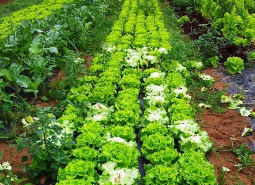 Plantas comestibles: 5 pasos para que las siembres en tu huerto familiar