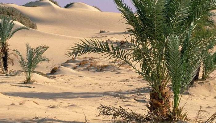 7 Mecanismos adaptativos que están presente en las plantas de desierto.