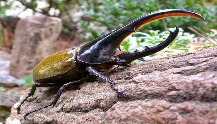 8 Insectos coleópteros entre los beneficiosos y perjudiciales para el cultivo