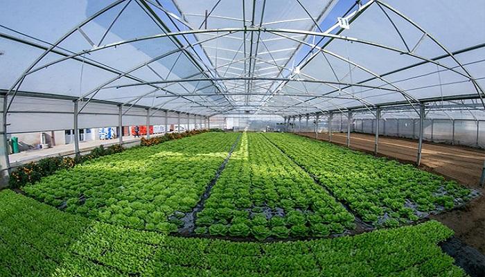 Conoce los 4 «Tipos de Agricultura» más comunes y sus generosidades