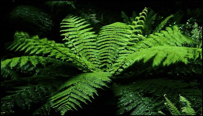 Plantas de Helechos: 13 Tipos diferentes y perfectas para tu hogar
