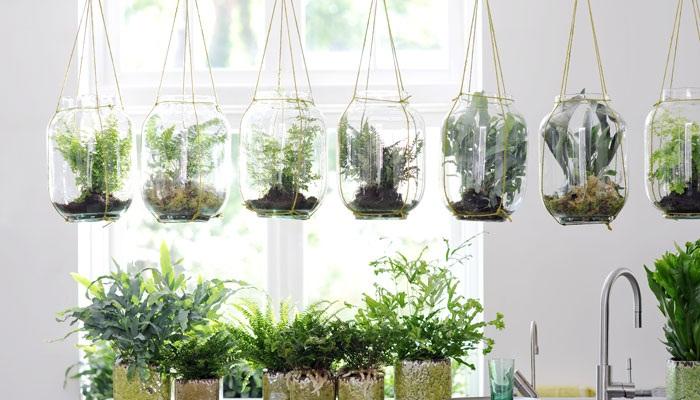 16 PLANTAS DE SOMBRA – ideales para la DECORACIÓN de interiores