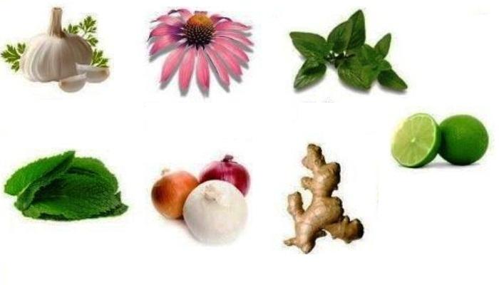 10 PLANTAS SILVESTRES con grandes «Beneficios para la Salud»