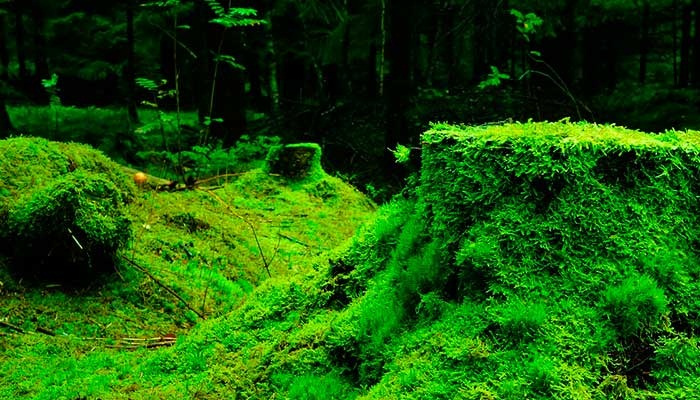 Plantas briofitas.