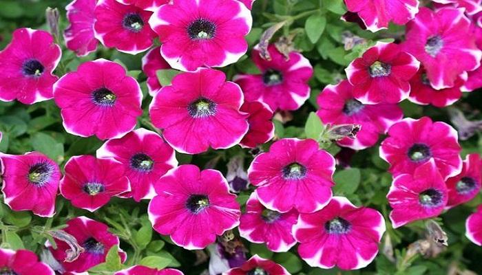 5 tipos de plantas ornamentales perfectas para tu jard n for Concepto de plantas ornamentales