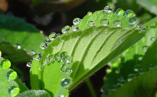 Transpiración EN LAS PLANTAS – Fenómenos Físicos y papel de los estomas