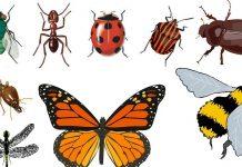 Órdenes de insectos