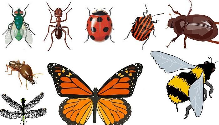 Las diferentes familias y órdenes de insectos de interés agrícola