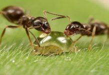 Tipos de hormigas
