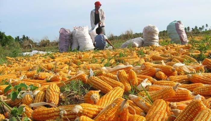 ▷ Índice de cosecha ◁ Estrategias para calcular el grado de madurez