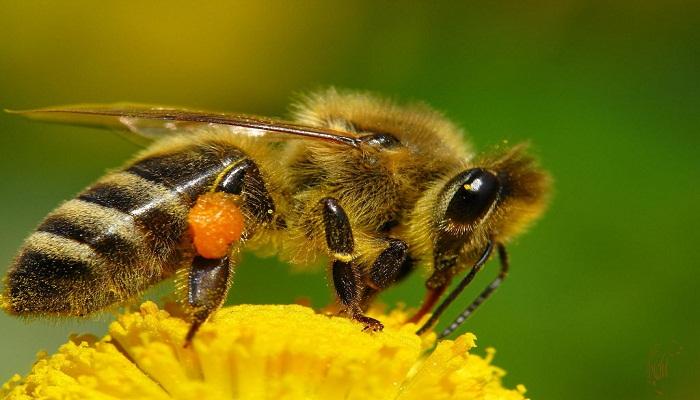 Los 6 Insectos más Mortales y Peligrosos del Mundo ⚠️ ¡Sorprendente!