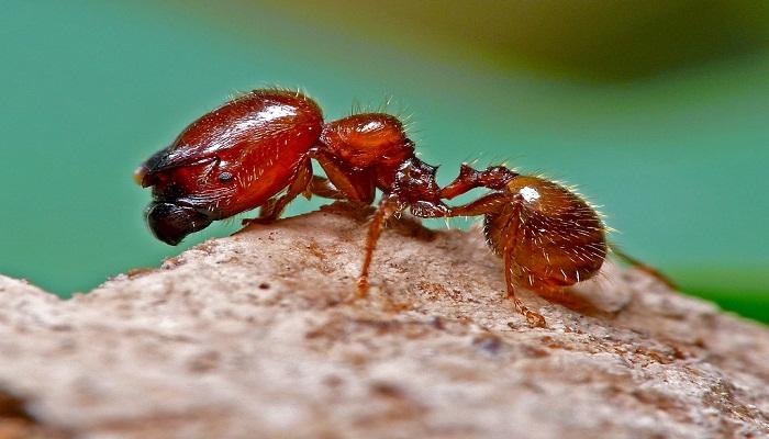 4 Insectos Mortales de los que debes alejarte ➕  VIDEO imperdible