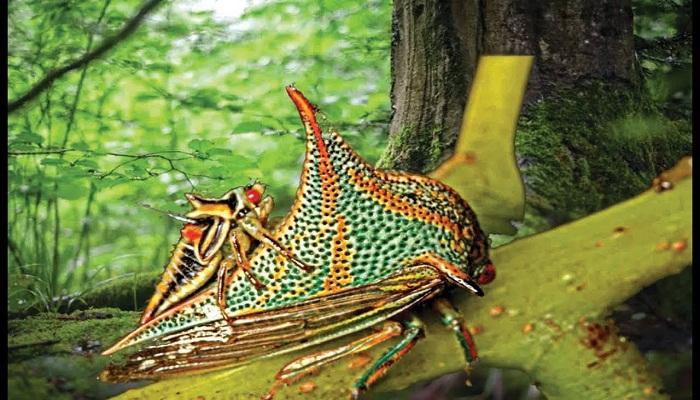 5 Insectos más Extraños del Mundo ✅ Asombrosas Rarezas de Insectos
