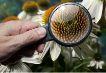 qué es la botánica