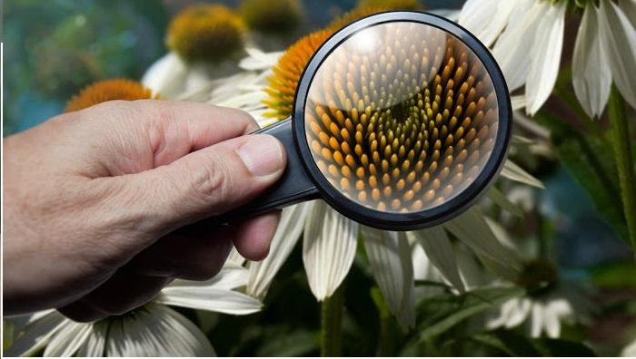¿Qué es la botánica? ⇨ La ciencia que estudia a las plantas