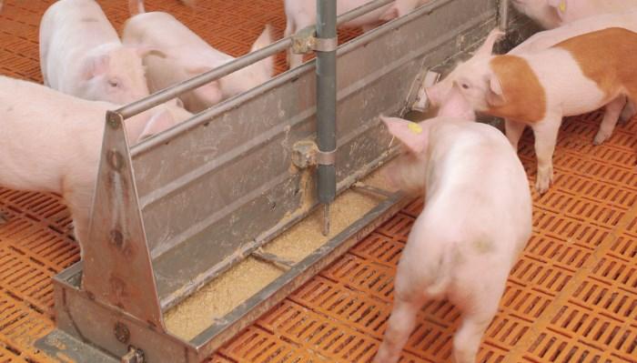 Instalaciones para cerdos de engorde