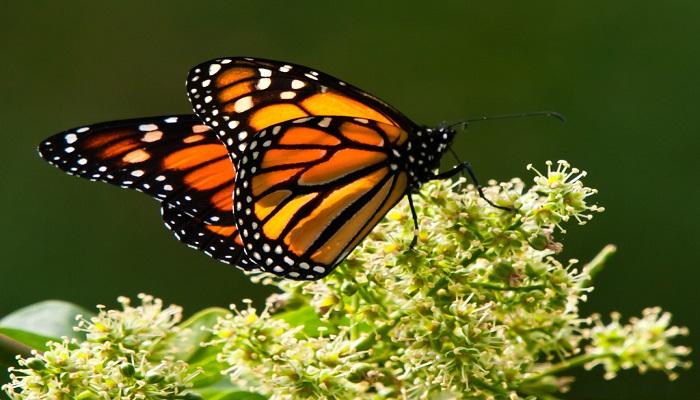 3 Espectaculares 【 Tipos de Mariposas 】⇨ Todo un mundo de Insectos!