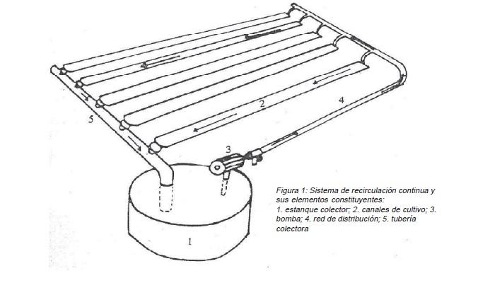 Sistema NFT de hidroponia