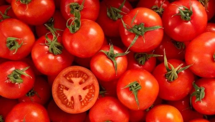 ✅ Manejo Agronómico del Tomate 🍅 9 datos del Cultivo del Tomate