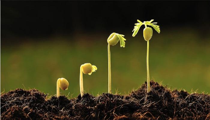 3 Semillas fáciles de germinar ⌛ Cosecha con Cultivos de Ciclos Cortos