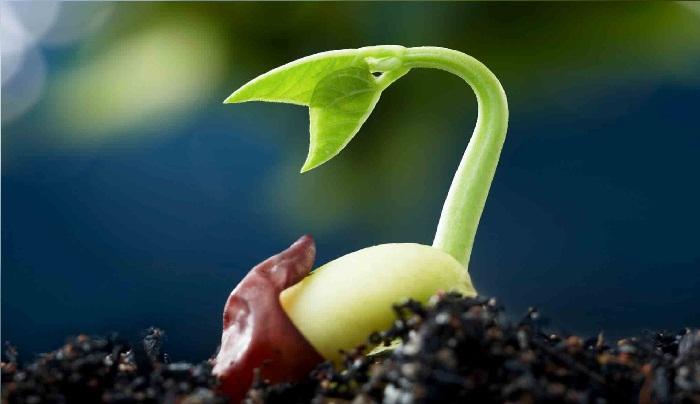 6 Semillas que Germinan Rápido ⌛ ¡Acelera tu producción!