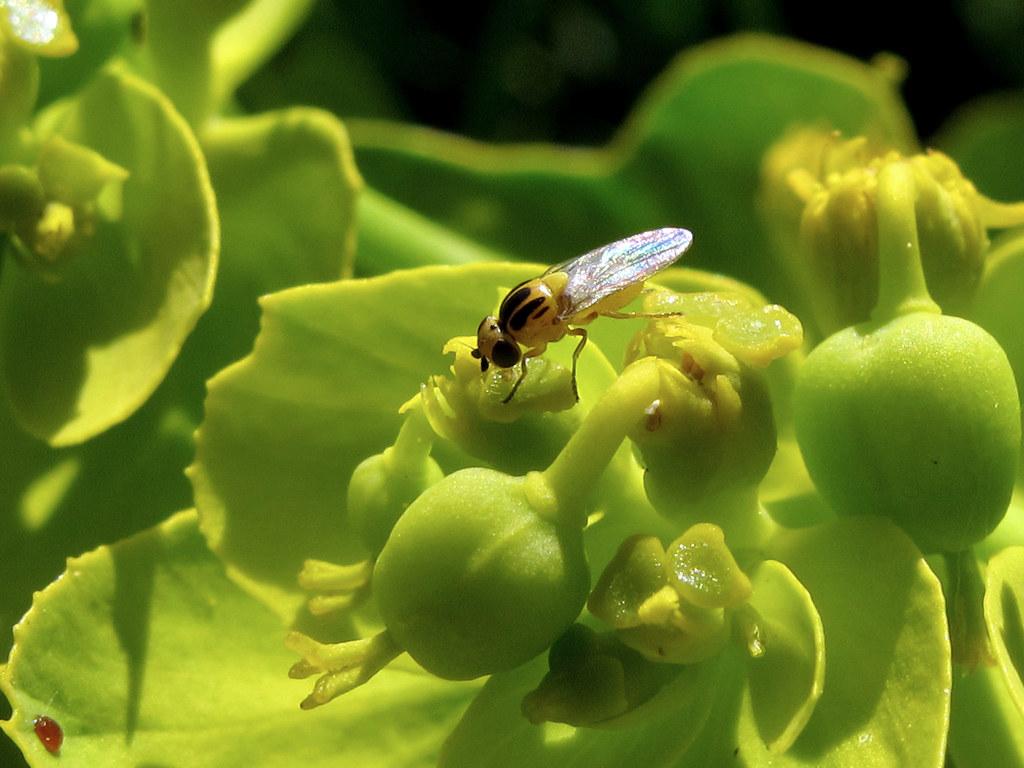 ⚡ Los Insecticidas Como Control Rápido de Plagas ⇨ en Cultivos Agrícolas