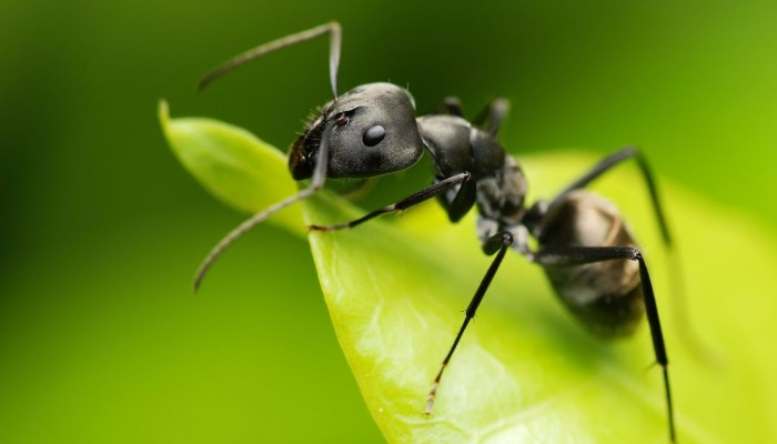 ✅ Tipos de hormigas en España ✍ ¿Plagas o no? – Aprende a identificarlas