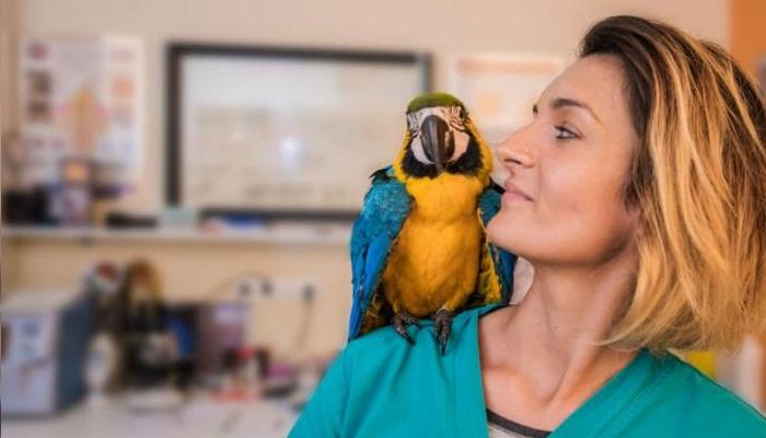 ✅ Centro de RECUPERACIÓN de AVES ⇨ ¡Protege la Fauna!