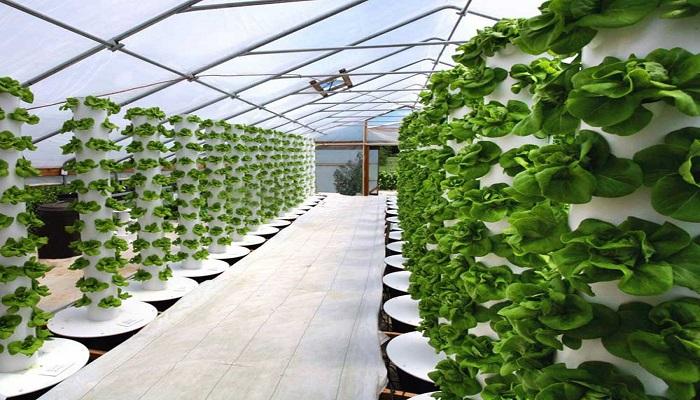 ✅ Cultivo hidropónico casero ⇨ ventajas, pasos y 3 plantas más comunes