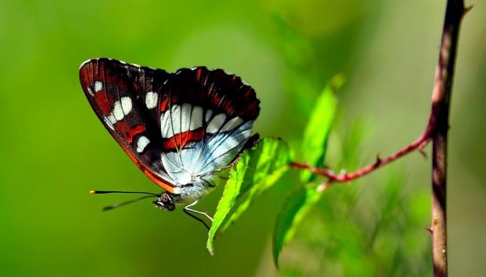 Las Mariposas - Animal más bonito del universo