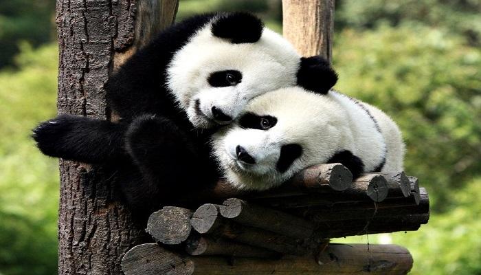 El Animal más Bonito del Mundo ▷ 11 Animales exóticos realmente bellos