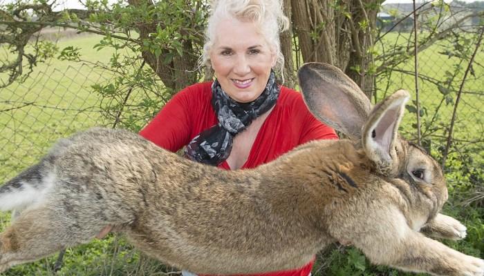 ✅ 7 Asombrosas Razas de Conejos Gigantes 😱 ¡Te sorprenderás!