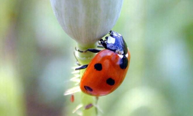 🔥 Control Biológico de Plagas Agrícolas →  Ventajas y Manejo