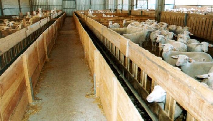 3 Fases para Construir ▷ Comederos de Madera para Ovejas ◁