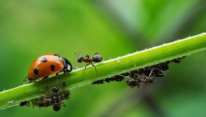 Cómo Eliminar las Plagas de las Plantas de forma Natural ✅ 5 Métodos