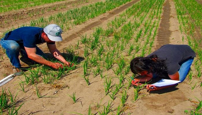 monitoreo del cultivo