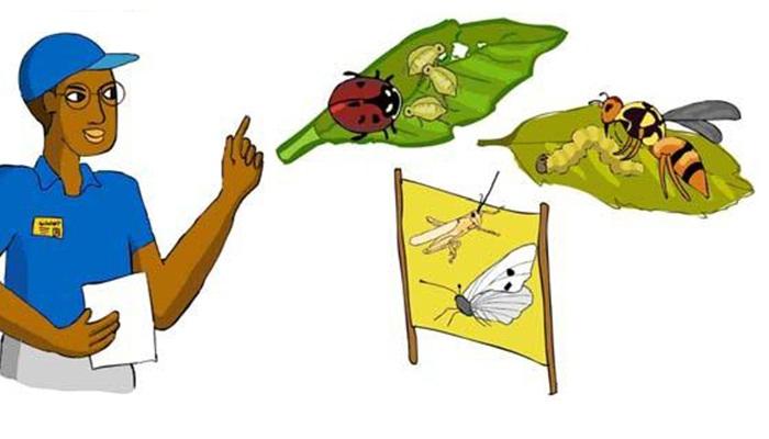 3 Alternativas para la ▷ Eliminación de Plagas ◁ a través del Manejo Integrado