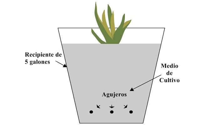 cubo simple para hidroponía