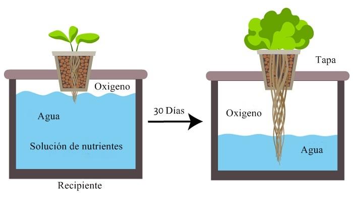 semillas a cultivar en un huerto hidroponico