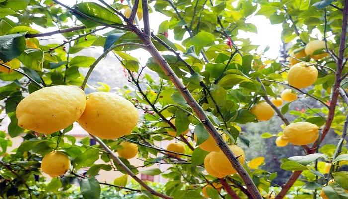 podas de arboles frutales 3 Tiempos Perfectos Para Saber Cuando Podar Arboles