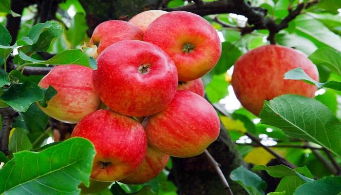 FRUTALES ECOLÓGICOS – 3 Recomendaciones frente a Cultivos usuales