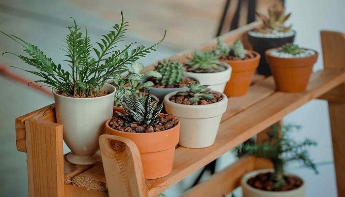 7 Plantas de Interior que Absorben Malas Energías del hogar