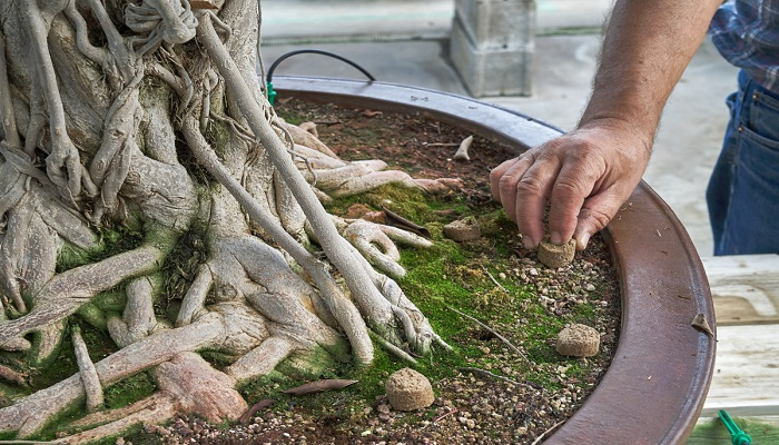 Cómo se utiliza el abono organico solido para bonsai