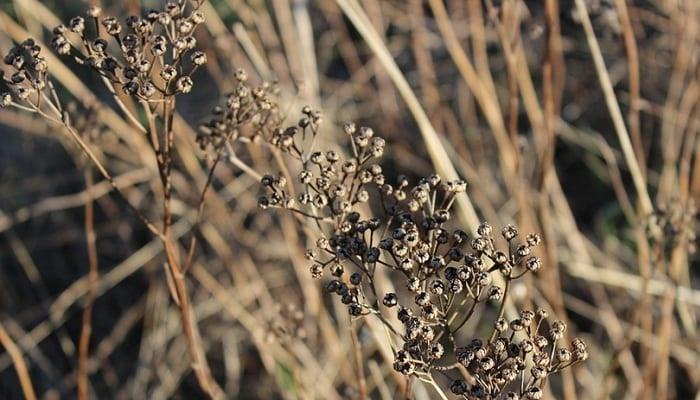 5 Plantas en Peligro de Extinción en España – ¡En peligro la flora ibérica!