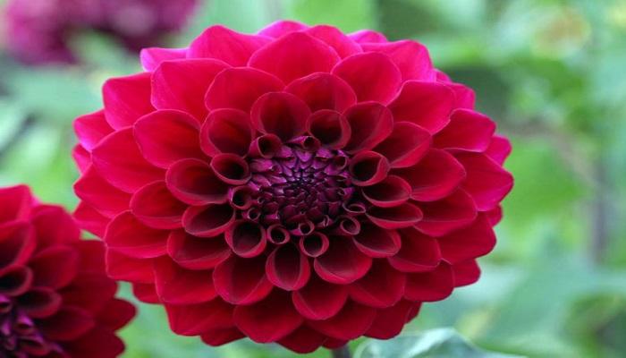 Las 15 Flores Mexicanas más populares ⇨ Te encantarán!