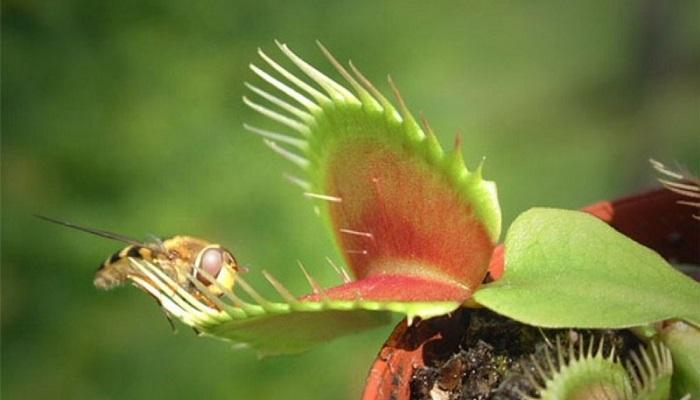 10 Plantas en Peligro de Extinción en el planeta
